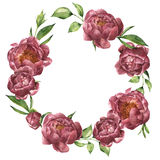 Watercolor wreath with peony and greenery. Hand painted floral composition with flowers and leaves isolated on white Royalty Free Stock Images