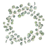 Watercolor wreath with silver dollar eucalyptus branch. Hand painted floral illustration with round leaves isolated on. White background. For design or print stock illustration