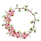 Watercolor wreath with tree branches with leaves and apple blossom. Hand painted floral illustration isolated on white Royalty Free Stock Image