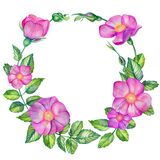 Watercolor wreath with wild rose