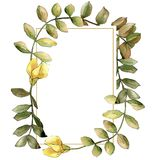 Watercolor yellow acacia leaf. Leaf plant botanical garden floral foliage. Frame border ornament square. royalty free illustration