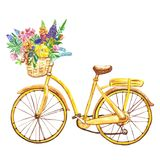 Watercolor yellow bicycle, isolated on white background. Hand painted bike with basket and wild flowers. Summer illustration. Watercolor bicycle illustration in stock photography