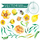 Watercolor yellow and green flowers and bee collection Stock Photos