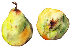 Watercolor yellow green pear ripe fruit isolated vector.  Stock Photography