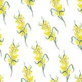 Watercolor yellow mimosa seamless vector print Royalty Free Stock Image