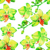 Watercolor yellow orchid flowers seamless pattern Stock Images
