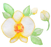 Watercolor yellow orchid Royalty Free Stock Images