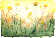 Watercolor yellow sun shine dandelions field landscape.  Royalty Free Stock Photography