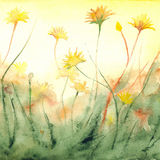 Watercolor yellow sun shine dandelions field landscape.  Stock Images
