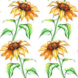 Watercolor yellow sunflower flower seamless pattern texture background.  Stock Photos