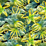 Watercolor ylang ylang pattern. Watercolor ylang ylang seamless pattern. Hand painted leaves and flowers. Herbal medicine and aroma therapy Stock Images