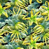 Watercolor ylang ylang pattern Stock Images