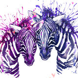 Watercolor zebra illustration. Cute zebra. Royalty Free Stock Photos