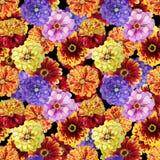 Watercolor zinnia pattern Stock Photo