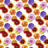 Watercolor zinnia pattern Royalty Free Stock Photo