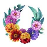 Watercolor zinnia wreath Royalty Free Stock Photos