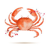 Watercolorcrab Stock Photography