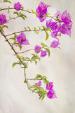 Watercolored Bougainvilleas Stock Images