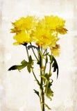 Watercolored chrysanthemum Royalty Free Stock Photography