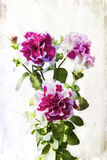 Watercolored crimson petunia Royalty Free Stock Image