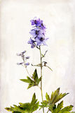 Watercolored delphinium Stock Photo