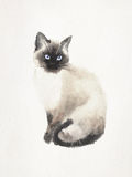 Watercolored illustration av en Siamese katt Royaltyfria Bilder