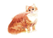 Watercolored illustration of red cat Stock Images