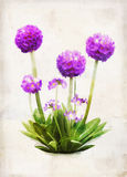Watercolored primula Stock Photo