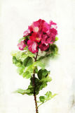 Watercolored rose Royalty Free Stock Images