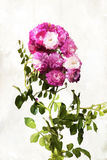Watercolored rose Stock Photos