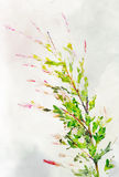 Watercolored variegated willow Royalty Free Stock Photography