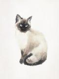 Watercoloredillustratie van een Siamese kat Royalty-vrije Stock Afbeeldingen