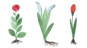 watercolors σκίτσων λουλουδιών διανυσματική απεικόνιση