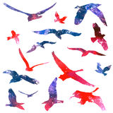 Watercolors birds Stock Photography