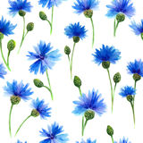 Watercolors blue cornflowers in white background. Watercolors painting. Floral background. Royalty Free Stock Image