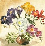 Watercolors painting:freesias. Stock Images