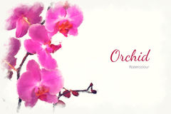 Watercolour орхидеи Стоковые Изображения