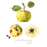 Watercolour Apple en Zaden Royalty-vrije Stock Foto