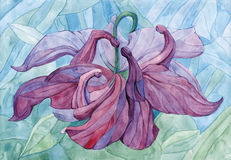 Watercolour art painting aquilegia flower Royalty Free Stock Photo