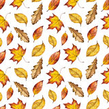Watercolour autumn background of yellow, orange and red leaf. Seamless watercolor pattern of leaves oak, maple, elm, watercolour autumn background of yellow Stock Images