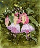 Watercolour-Blumen stockbild