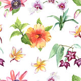 Watercolour botanical illustration Tropical flowers seamless pat Royalty Free Stock Photos