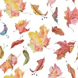 Watercolour colorful maple leaves and linden seeds pattern. Watercolor hand drawn floral raster seamless texture with maple leaves and linden seeds stock photography