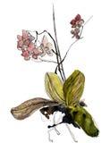 Watercolour da orquídea ilustração royalty free