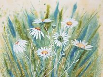 Watercolour Daisies. Pretty watercolour painting of wild white daisies in the grass Royalty Free Stock Photo