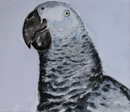 watercolour de perroquet Photo libre de droits