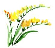 Watercolour del fiore di Fresia Fotografie Stock Libere da Diritti