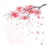 Watercolour di Sakura illustrazione di stock