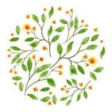 Watercolour floral do vetor Foto de Stock
