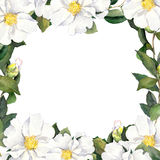 Watercolour floral frame with white flowers edging Royalty Free Stock Image